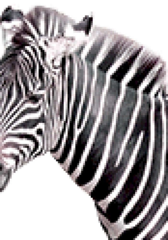 Zebra Sounds 101soundboards Com