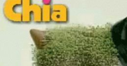 Chia Pet Advert Music