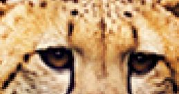 Cheetah Soundboard