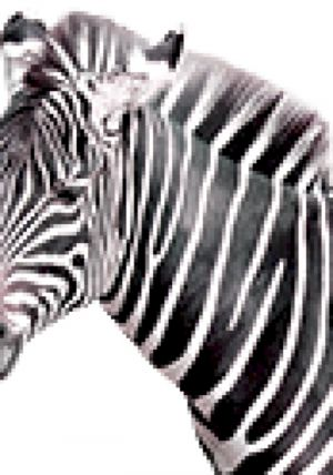 Zebra Sounds